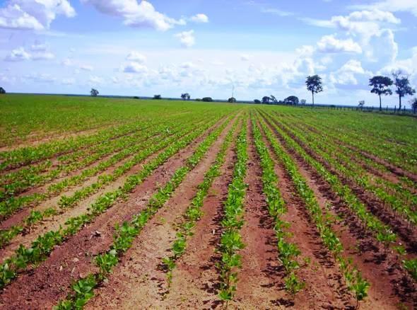 Expansão Agrícola