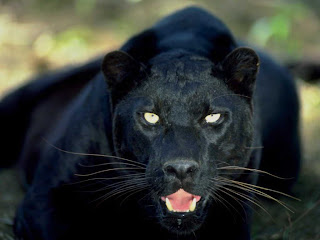 Imagenes de animales salvajes