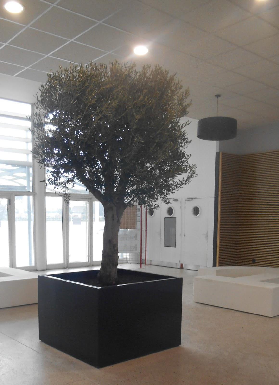 Galerie photos bacs sur mesure image 39 in le bac arbre indoor image 39 in - Bac a arbre ...