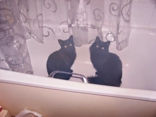 cats in the bath