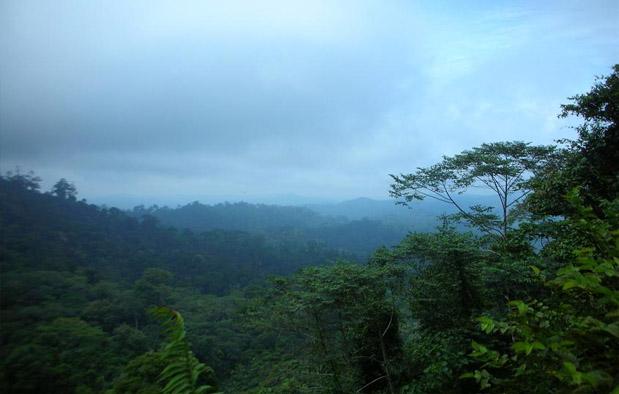 Ekosistem Darat Hutan Basah Bioma