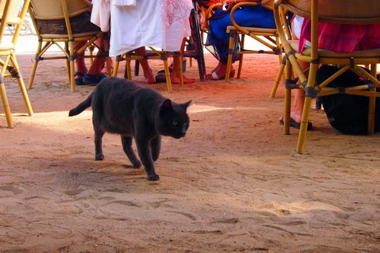 Cat from a beach bar in Santa Eularia