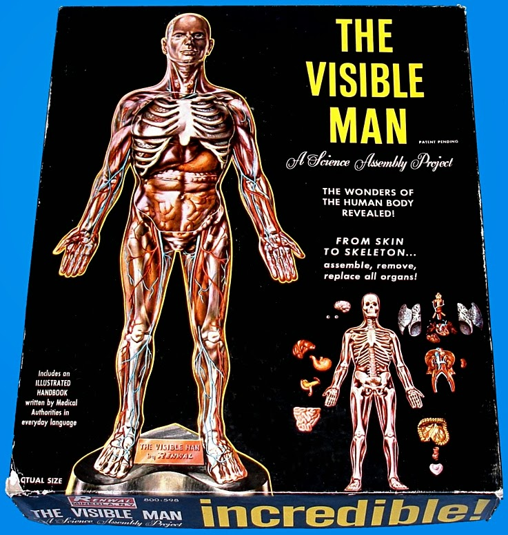 Scale Model News: RENWAL CLASSIC \'VISIBLE MAN\' KIT: INVISIBLE ...