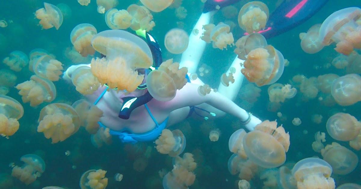 Life Of Jelissa Jellyfish Lake Palau