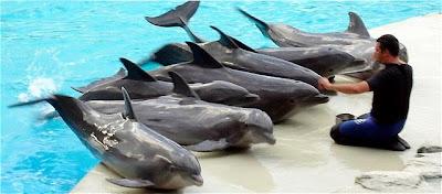 delfini Igea Marina parco