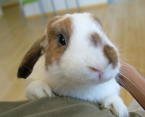 Funny rabbit..