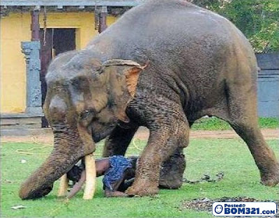 Nyaris Di Bunuh Gajah