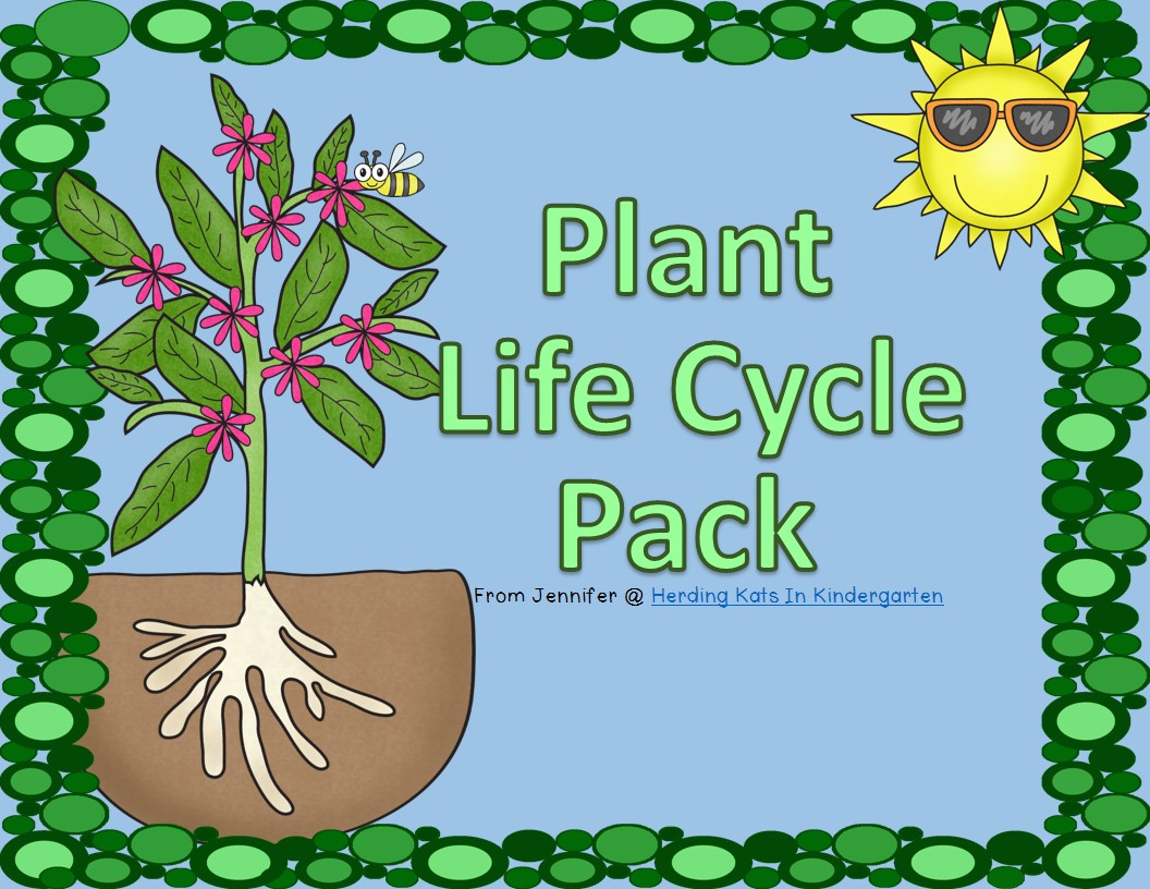 Plant Life Cycle I start our life cycle study