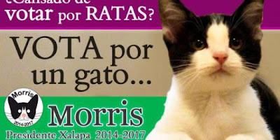 Seekor Kucing Menjadi Calon Walikota di Meksiko