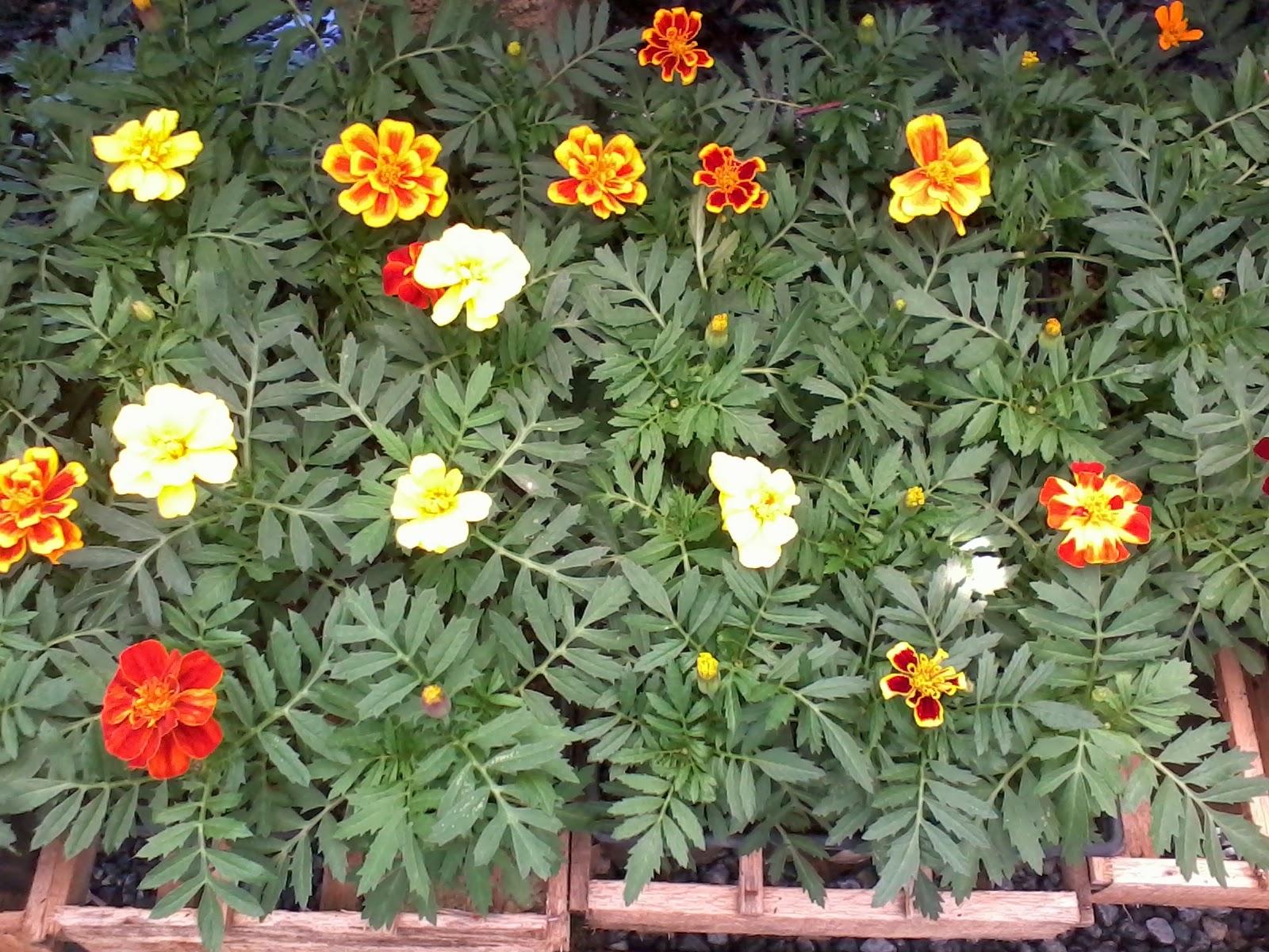Populares Mania de Verde: Flores da época TB57