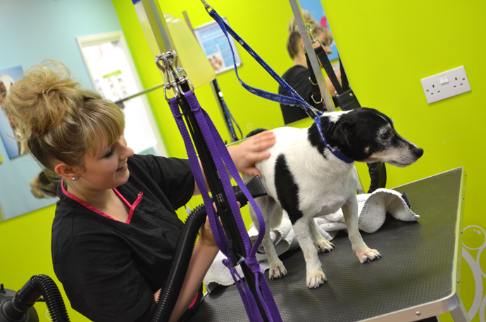 Our visit to the Pets At Home Groom Room - Bang on Style