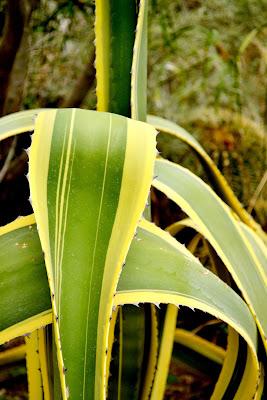 botany, cacti, cactus, desert life, plants, palm springs, moorten botanical garden, succulent