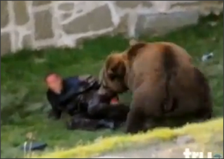 Beruang Zoo Makan Gigit Cedera Orang Mati