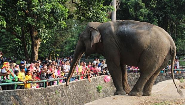 Kebun Binatang Ragunan tempat Rekreasi di Jakarta