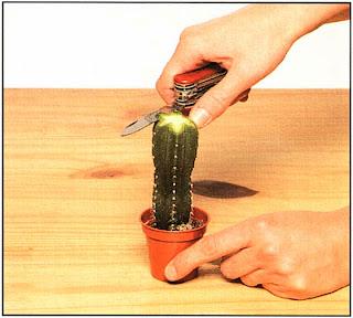 Слегка выровняйте края среза ножом