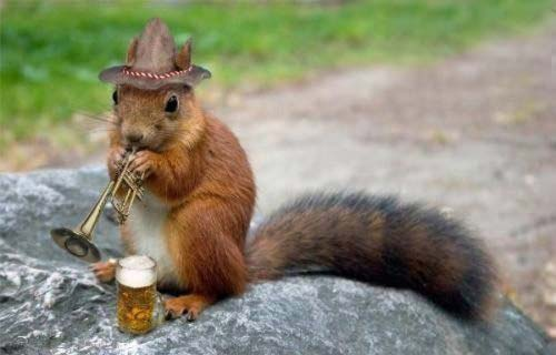 Funny squirrel pictures - photo#11