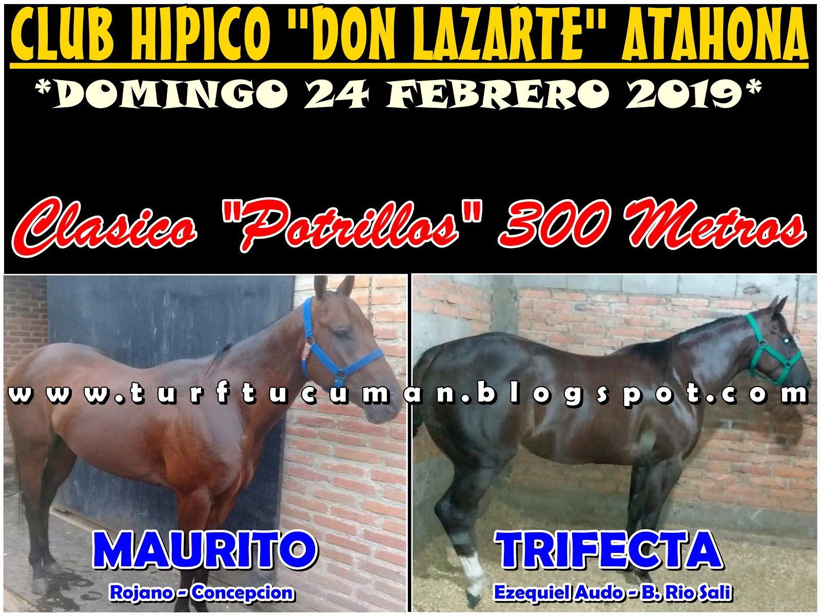 MAURITO VS TRIFECTA