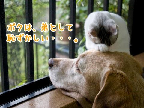 犬の頭に手を載せる子猫