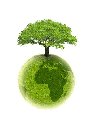 Proteja a natureza e valorize a vida!