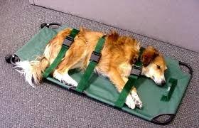 maca para cães