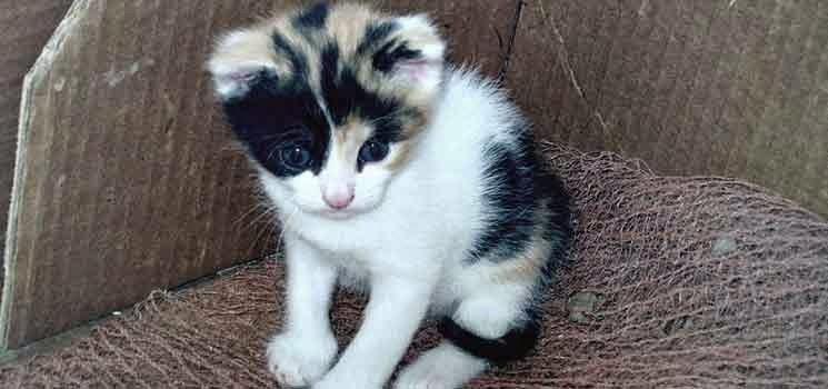 Anak kucing berumur satu bulan