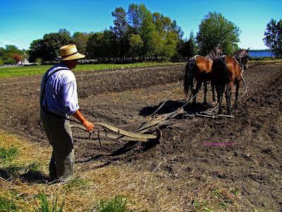 hombre de campo arando