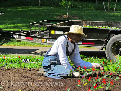 Para Kanp, head gardener at Brueckner Gardens, planting annual bedding plants.
