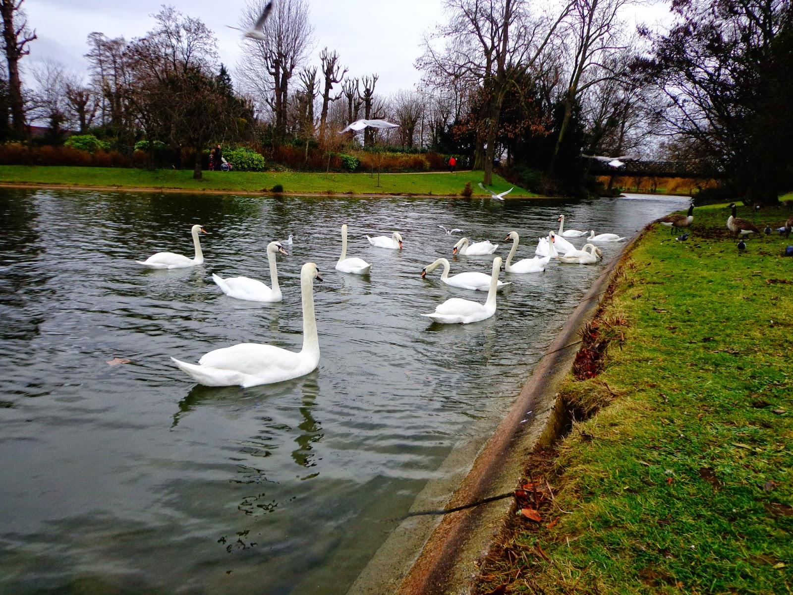 Лебеди-в-Париже