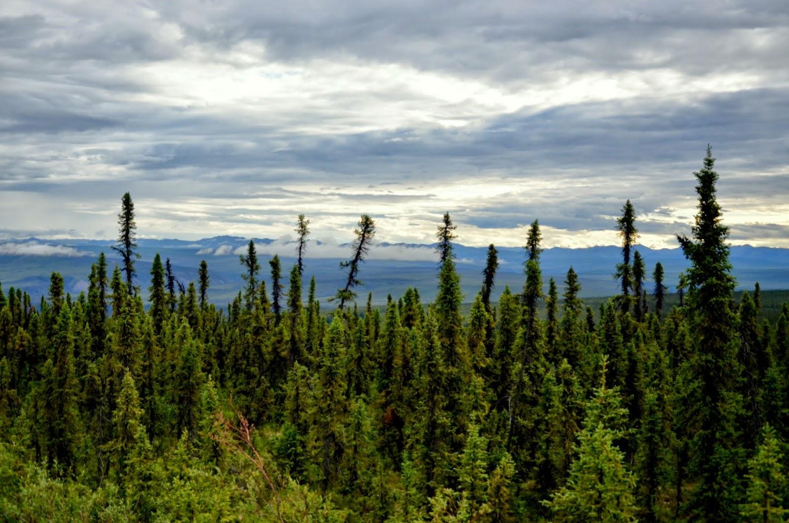 Yukon Landscape.