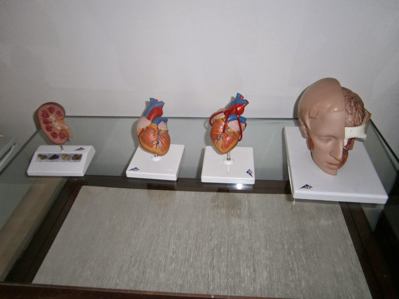 Кабинет анатомије