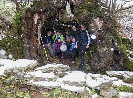 http://www.lavozdegalicia.es/noticia/lemos/2014/02/18/castano-monumental-courel-refugio-contra-nieve/0003_201402M18C4992.htm?idioma=galego