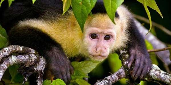 Wanita Ini Dibesarkan Kawanan Monyet [ www.BlogApaAja.com ]