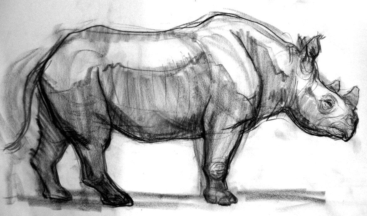 Doodles and Crap!: A few Rhinos!