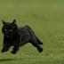 Asal mula, Misteri serta Mitos tentang Kucing