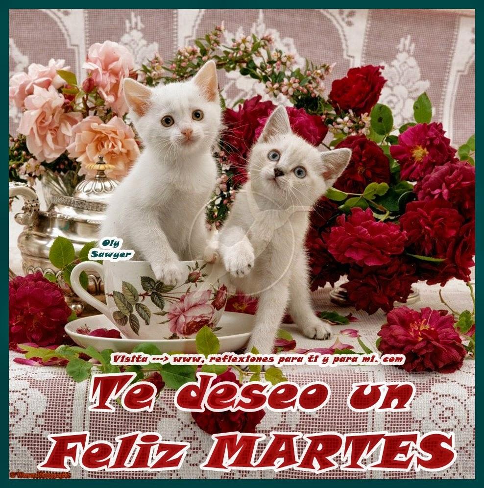 feliz martes flores y gatos