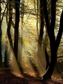 Mencari Sinar Cahaya