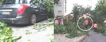 Árvore abate-se sobre carro e autarquias descartam responsabilidades