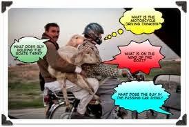 Funny Bakra Eid ul Azha 2014 SMS