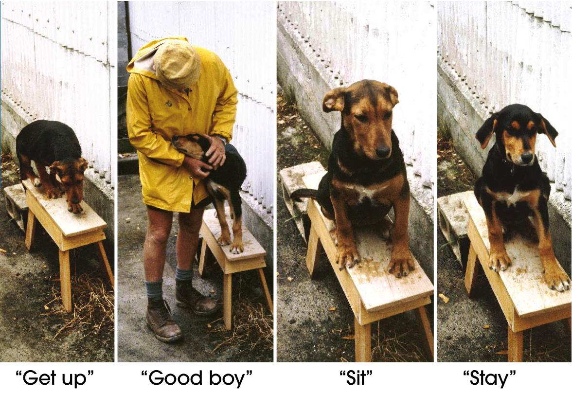 Heading Dog Training