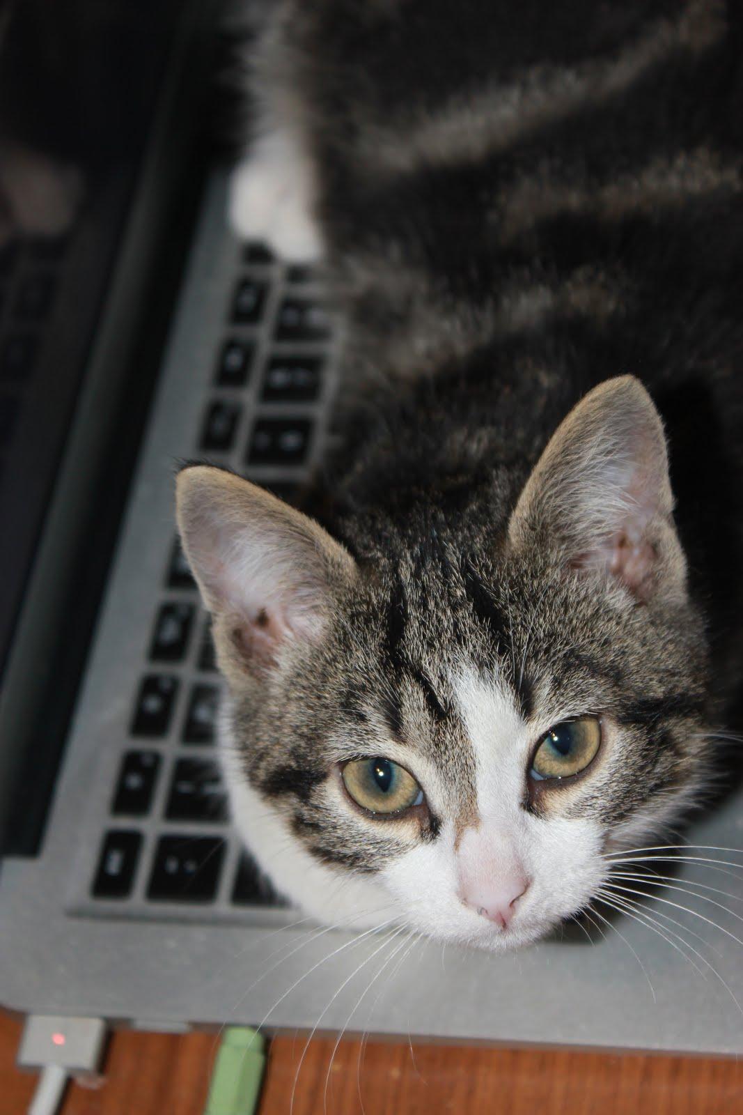 Eli the Kitten