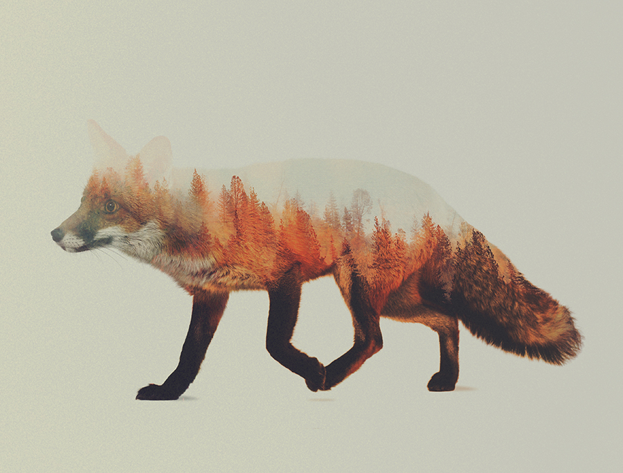 04-Fox-Andreas-Lie-Animals-in-Photographic-Double-Exposures-www-designstack-co