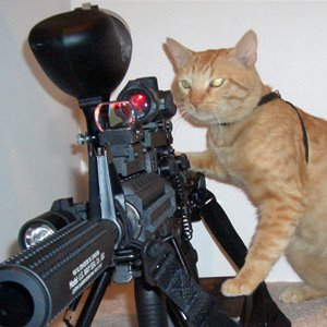 Latest Funny Pictures: Funny Cats With Guns