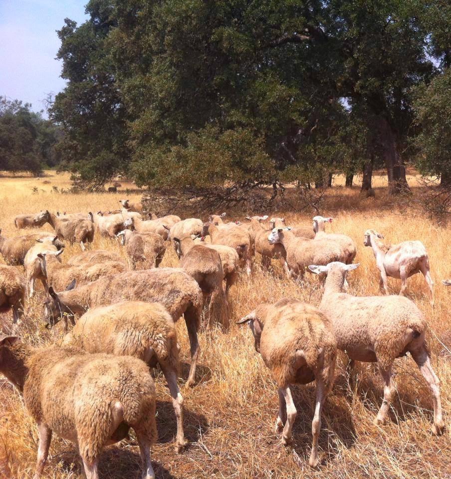 El Nino – or La Nada – Preparing for a Fourth Year of Drought