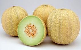 bisnis melon