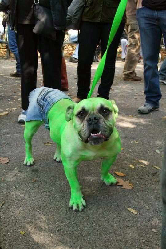 perro disfrazado del increible hulk