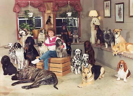 Mis cosas casas - Perros para tener en casa ...