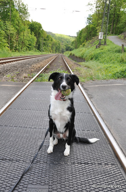Ralph on train tracks