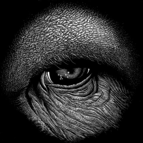 Jonathan Windham olhos animais