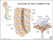 Let's first discuss the lumbar spine and it's anatomical details.