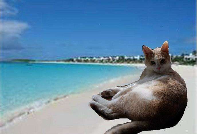 Topless Beaches Are Great Dont You Agree Do Think Anyone Will Recognize Me Maybe Ill Be In A French Magazine Too